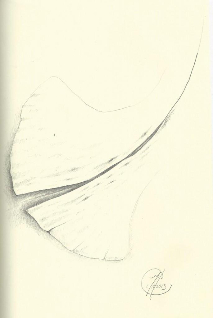 Leaf - Pencil- 1.12.2013