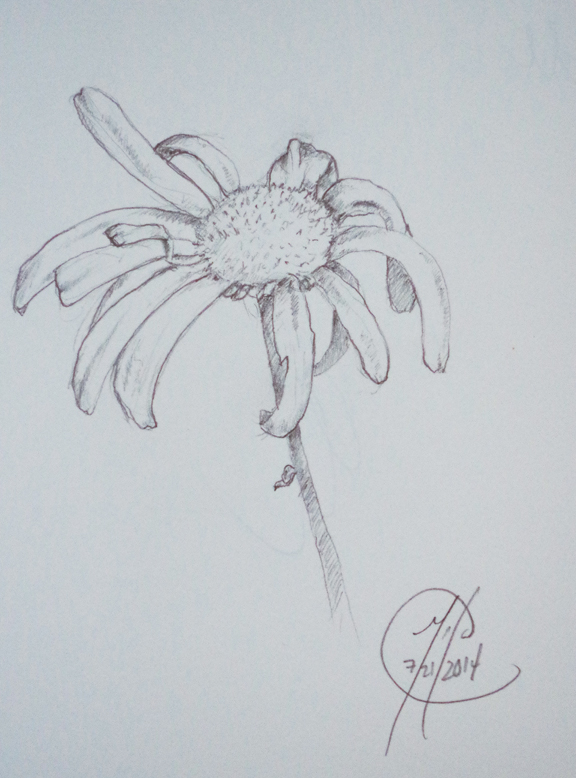 Daisy 07212014 - Pencil on paper